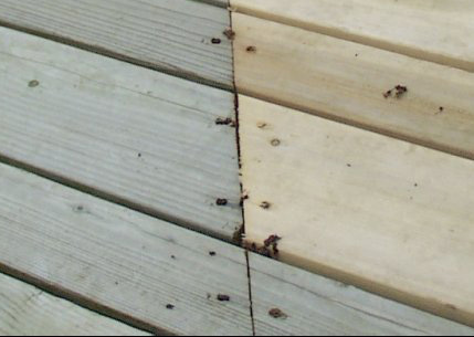 New And Old Deck Boards